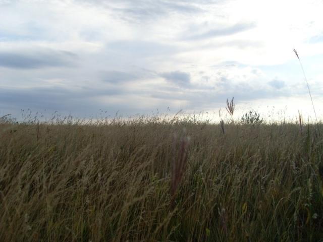 И на Тихих Холмах колосится пшеница...